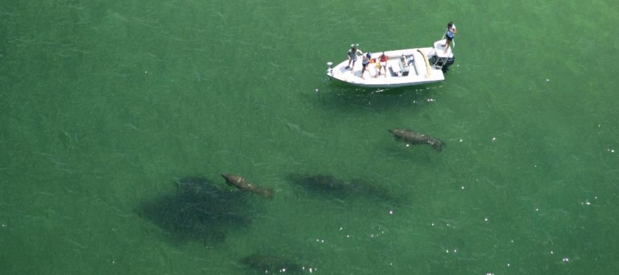 Charlotte County Manatee Protection Plan